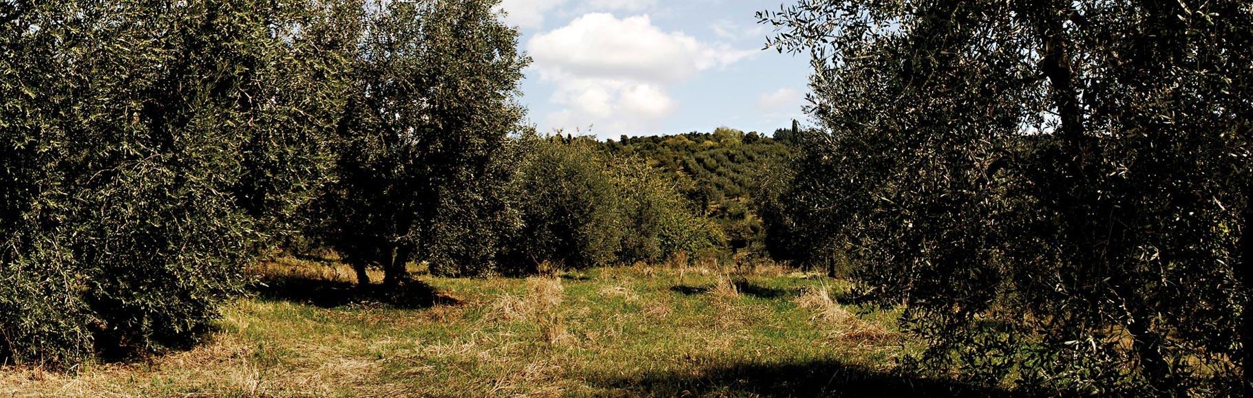 latorre_olivi